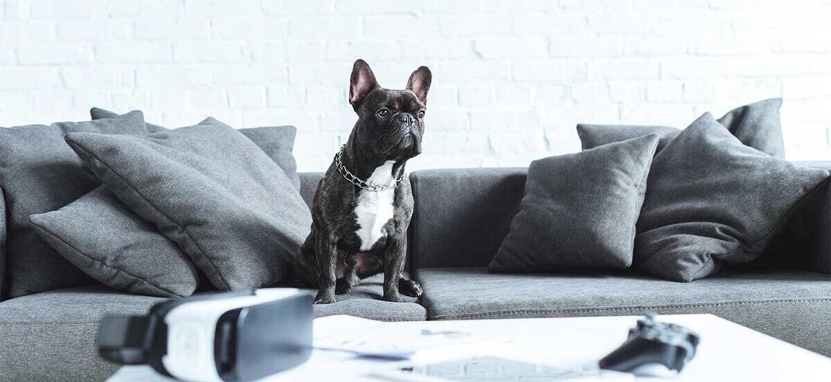 выбрать диван, если в доме животное