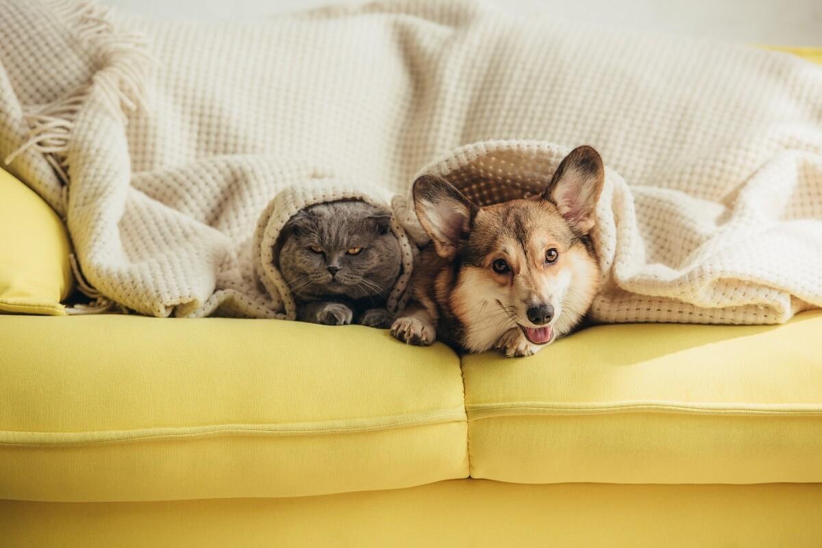 выбор ткани для дивана, если есть животное
